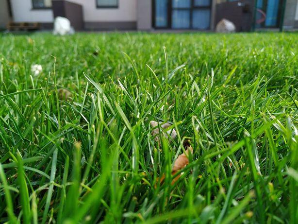 рулонный газон с работой.посевной газон.автоматический полив.