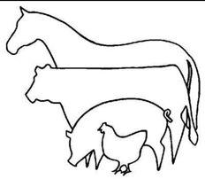 Молоко для с/г тварин цiни виробника 20кг