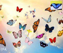 Салют живых бабочек для подарка на праздник.