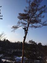 Удаление деревьев Ирпень, Буча, Ворзель