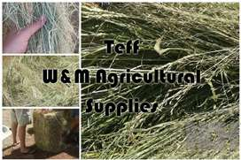 Lucerne, Teff and all other hay for sale