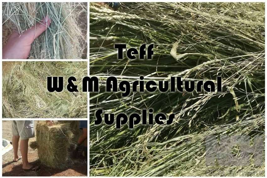 Lucerne, Teff and all other hay for sale 0