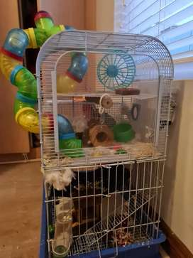 2 baby hamsters, Cage and all accessories