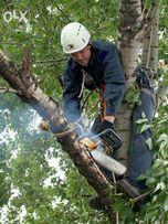 Обрезка и чистка деревьев