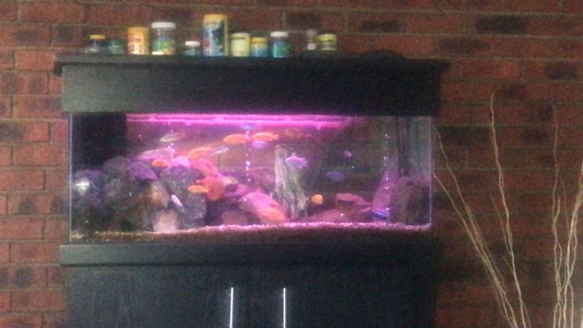 4 foot fish tank with cabinet 0