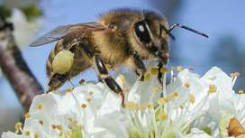 Pollination service, Bee hives