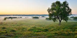 Срочно продаю участок земли под Киевом, 86 соток