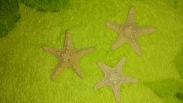 Звезда, звёздочка для аквариума