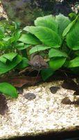 Аквариумы,оргстекло,стойки,все для аквариума