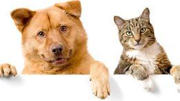 СТЕРИЛИЗАЦИЯ,КАСТРАЦИЯ котов и собак с выездом на дом