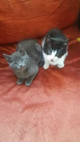 9 week old kittens looking for a loving home