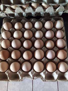 Fertile mixed breed Eggs for Sale
