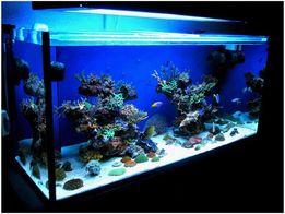 Услуги по запуску и обслуживанию аквариумов