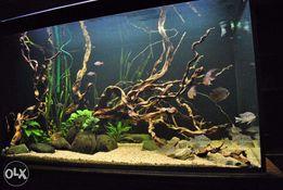 Обслуживание ваших аквариумов в кафе или офисе.
