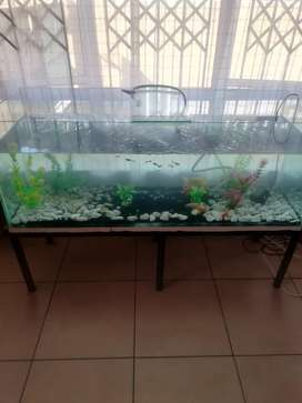 4foot fish tank with everything