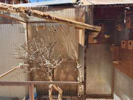Birds Cage and Birds for Sale