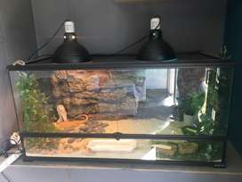 Large glass reptile cage and accessories