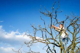 Осенняя обрезка сада - фруктовых садовых плодовых деревьев в саду !!!