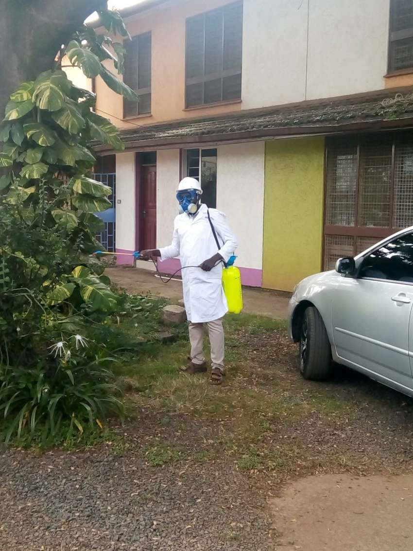 Control of Pests done by Experts/Pest Control services 0