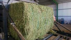 High quality Lucerne & Oaten Hay bales