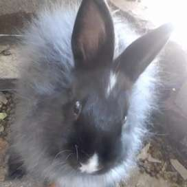 All R700,Angora Bunnies,Dutch and 5 other Bunnies for sale