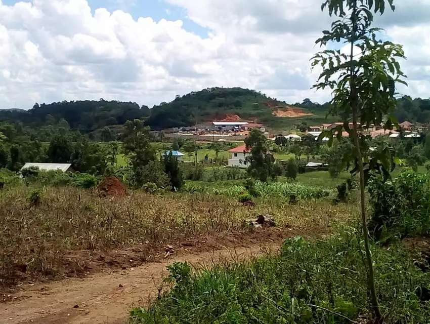 4 plots in Bugema 250 metres off tarmac at 15m each 60m for all m 0
