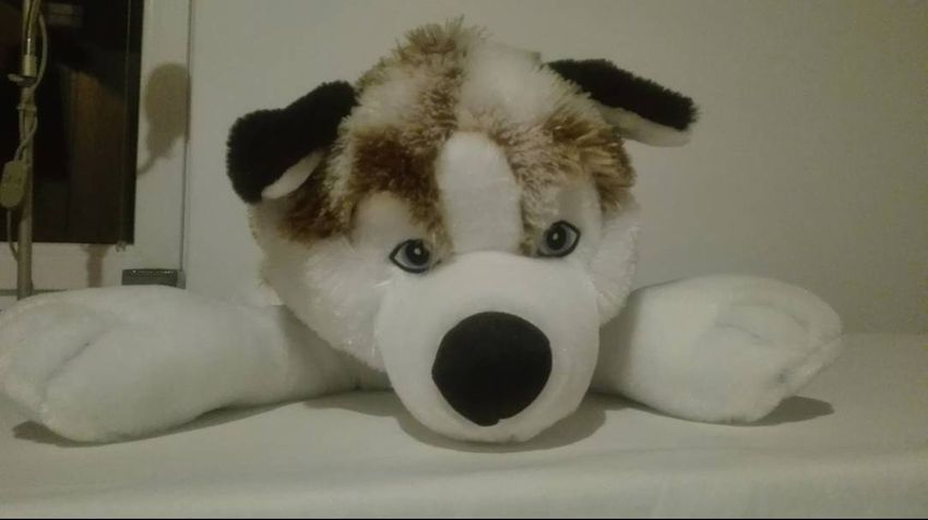 Plysovy pes husky - velky 0