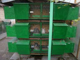 Продам кролячі клітки