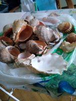 Морские ракушки для аквариума