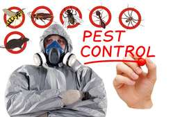 SAFETY FIRST PEST CONTROL AND FUMIGATION