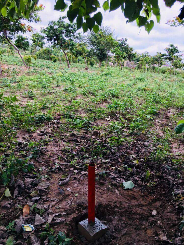 Get This Dry And Cheap Land With C of O At FUTURE HOMES,  Abuja. N500k 0