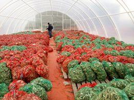"""Теплица фермерская для бизнеса """"под ключ"""" 10*50 от производителя."""