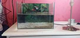 Fish ponds for sale
