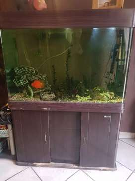 Large Fish tank with cabinet