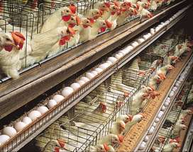 FRD POULTRY AND FARMING EQUIPMENT