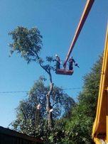Спил деревьев, обрезка, удаление деревьев Днепропетровск