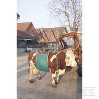 Temblak , urządzenie do podnoszenia krów , udzwig 1 000 kg