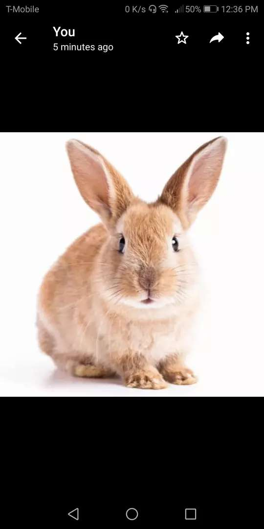 Rabbit for sale 0
