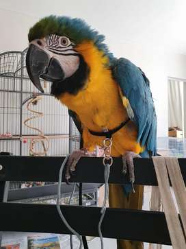 Parrot Harnesses and Leash