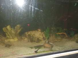 4 foot tank with lots of extras