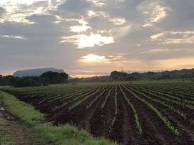 250ha Crop and cattle farm for sale Modimolle