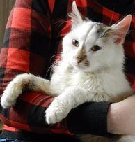 Марик - 2-х летний котик ищет семью!