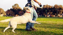 Выгул собак передержка