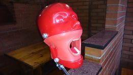 Фантом стоматологический с имитатором височно нижнечелюстного сустава
