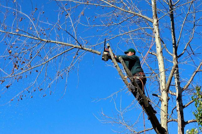 Спил дерева покос травы любой сложности обрезка веток порезка дров