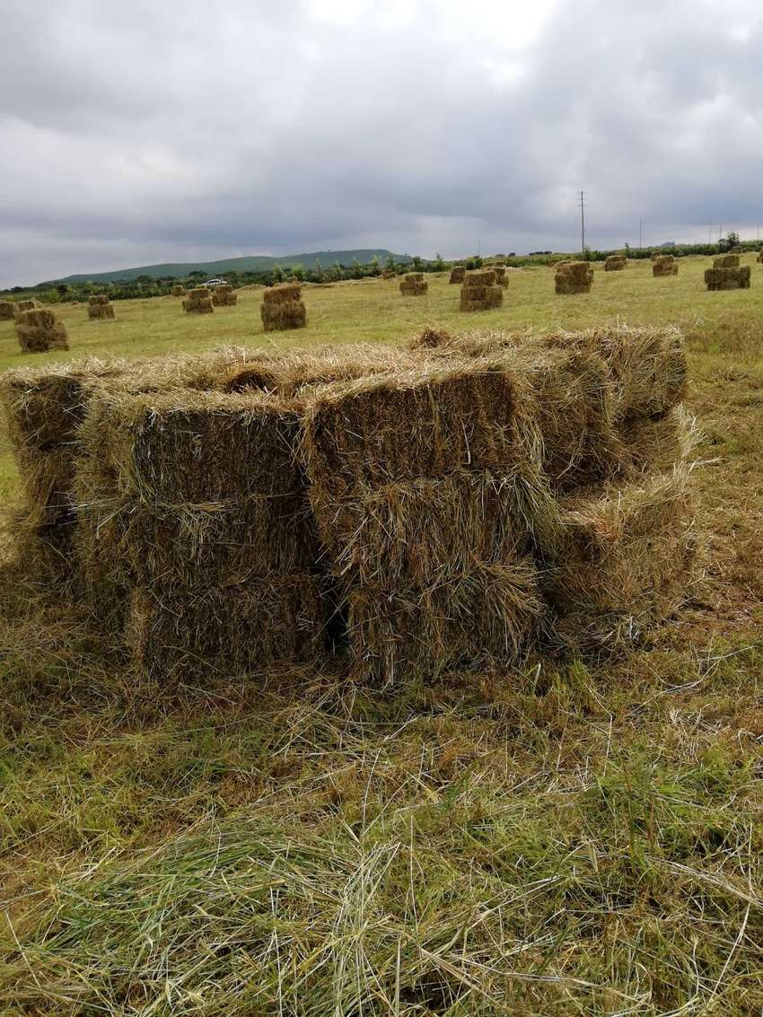 HAY FOR SELL 0