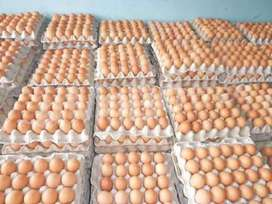 Affordable  Chicken eggs
