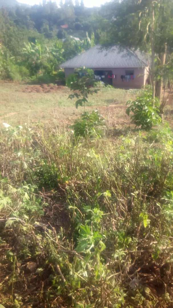 Big pieces of land for sale in Busamaga Mbale. T 0