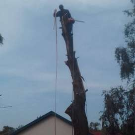 Tree Felling, Grass Cutting and Garden Services