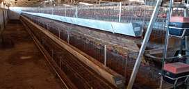 CHICKEN EGG LAYING CAGES
